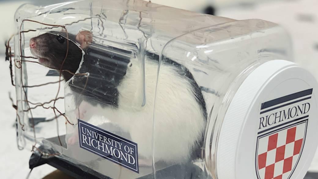 Mira cómo 17 ratoncitos aprendieron a guiar un carrito