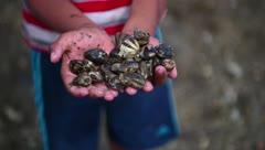 Investigan la muerte masiva de moluscos