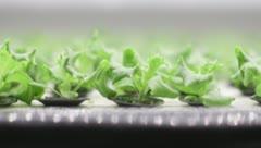 """Japón crea """"fábricas de verduras"""" para sustituir la agricultura tradicional"""