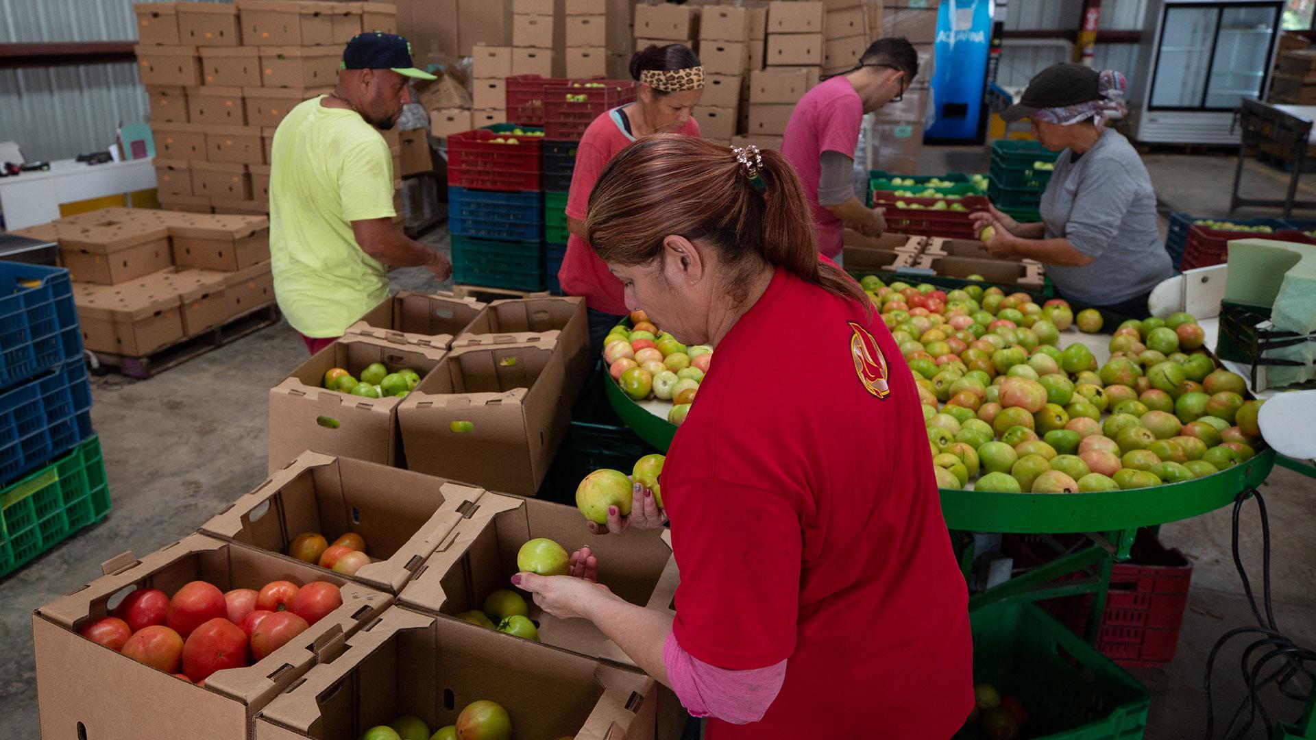 Voluntarios salvan finca en Guánica entre los temblores