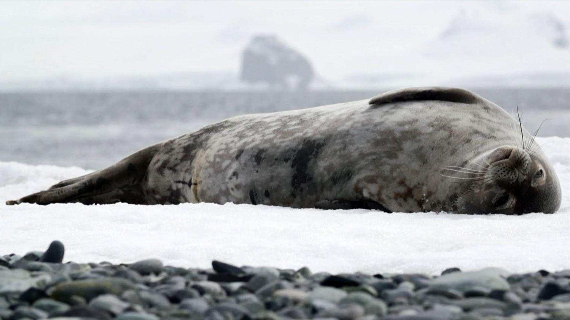 Algo inusual ocurrió en la Antártida