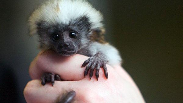 Sorpresivo nacimiento en un zoológico en México