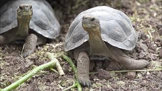 Coronavirus dio un doble golpe a Galápagos