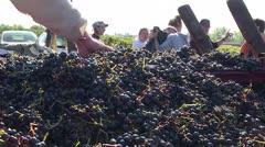 Producción mundial de vino cae a su peor nivel en más de 50 años