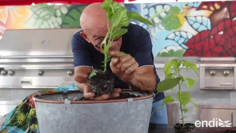 Los trucos de Douglas Candelario para crear un huerto en un espacio pequeño