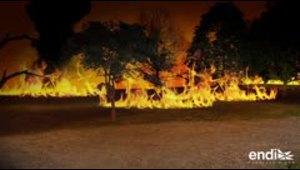¿Cómo comienzan y se propagan los fuegos forestales?