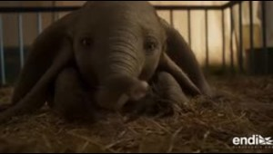 La nueva película del elefantito que te roba el corazón