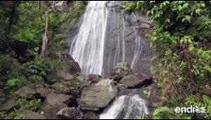 Investigan cómo el cambio climático está afectando El Yunque