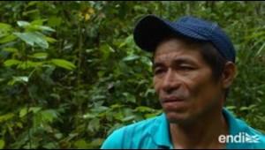 Perú refuerza la protección de sus bosques en la Amazonía