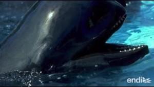 Nueva investigación sugiere el descubrimiento de una subespecie de delfín