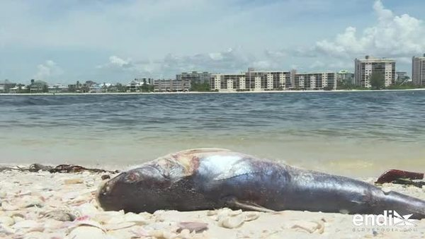 La marea roja, otro desastre natural de Florida