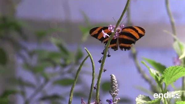 """¿En peligro de extinción los insectos """"buenos""""?"""