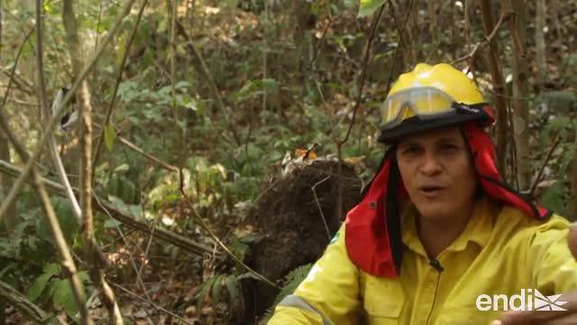 Evo Morales acepta ayuda internacional y suspende campaña por incendios forestales en Bolivia